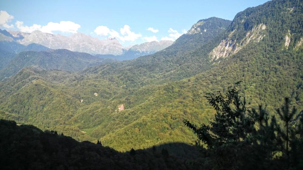Swanetien/riesige Waldflächen/grosser Kaukasus/Georgien