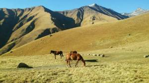 pferde-chaukhi
