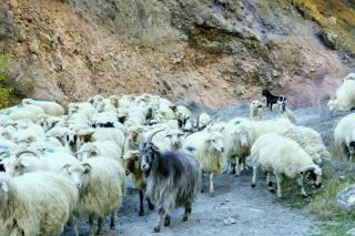 Trusoschlucht: Raue, berührende Natur