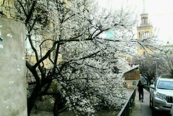 In der Altstadt blühende Bäume. Der Frühling ist da!